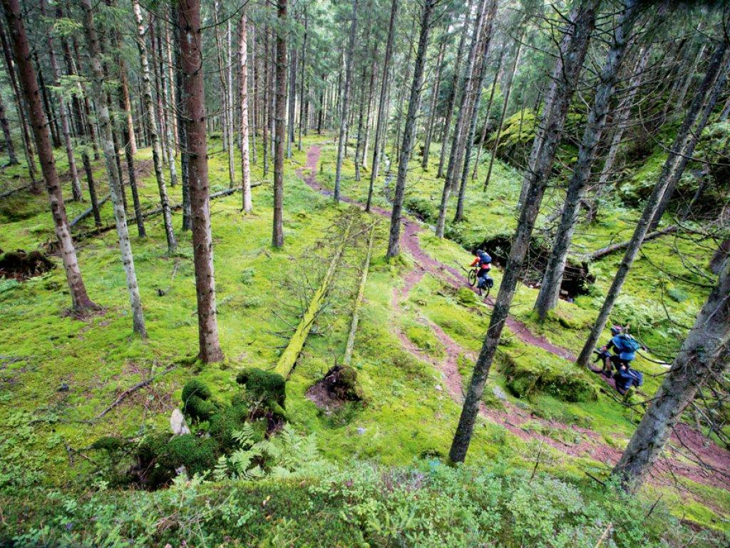 Saga leśnych ludzi