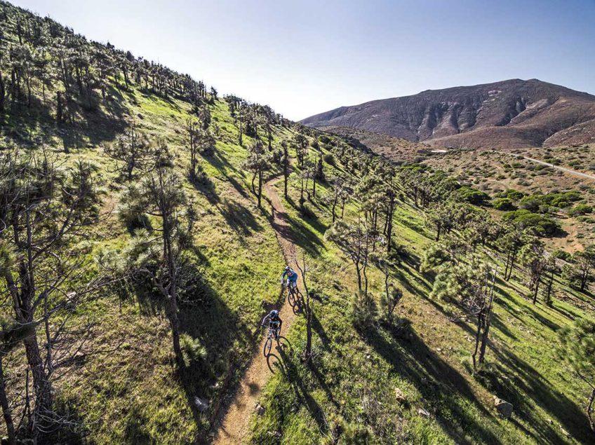 Fuertaventura ścieżki mtb, las piniowy